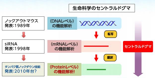 研究内容 | 宮本分子医科学研究室(東京理科大学総合研究院)
